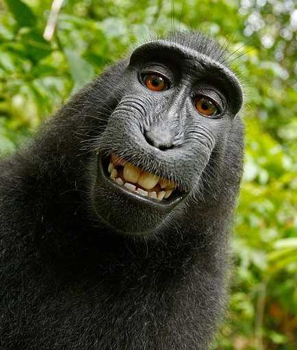 We All Own the Monkey's Selfie.
